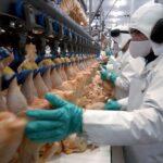 Por las retenciones, cayeron las exportaciones de carne de pollo